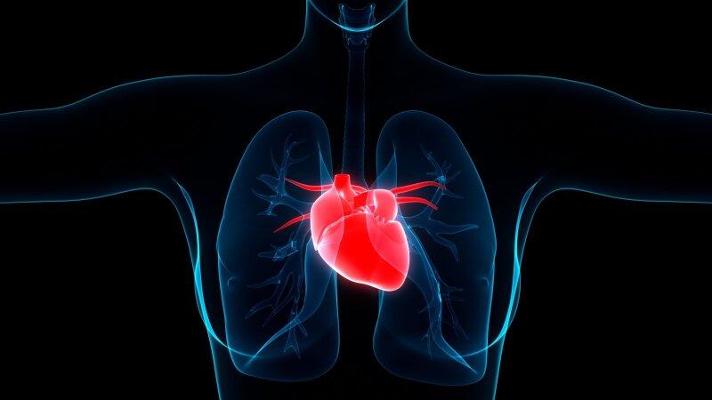 didelė natrio ir širdies sveikata