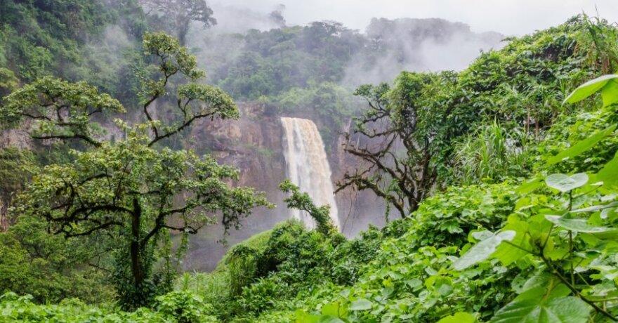 Kamerūnas