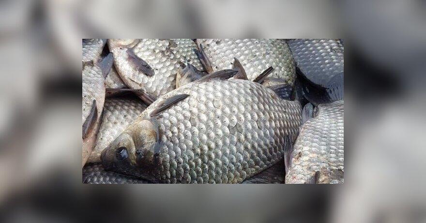 akvakultūra
