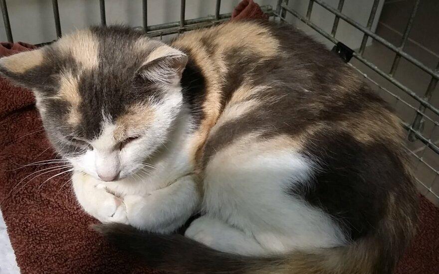 Katytė, kuri nusipelnė rasti namus: skaudi Smilgos istorija
