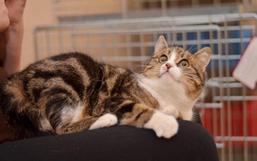 Degalinėje išmesta jauna katytė ieško namų!