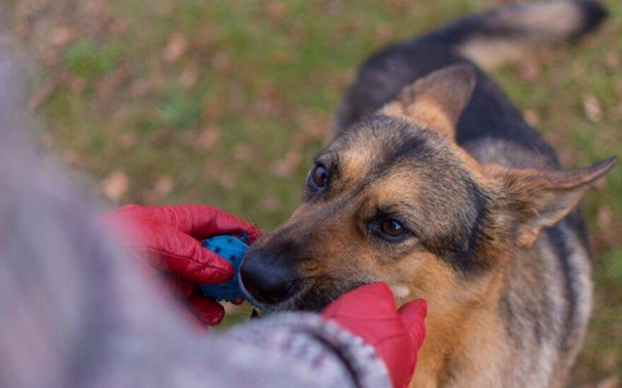 Jau šešerius metus džiugina iš prieglaudos namo paimtas šunelis
