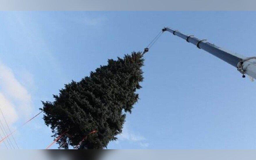Kalėdų eglė
