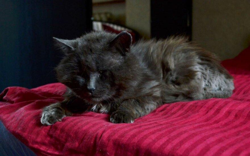 Katinėlio Buco vargo istorija