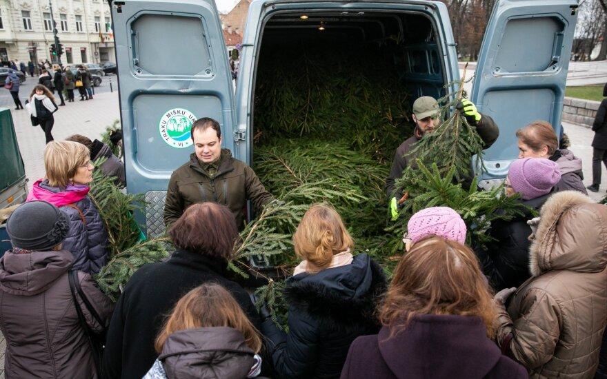 Miškininkai gyventojams įteikė tikrą kalėdinę dovaną: išdalino tūkstančius eglių šakų
