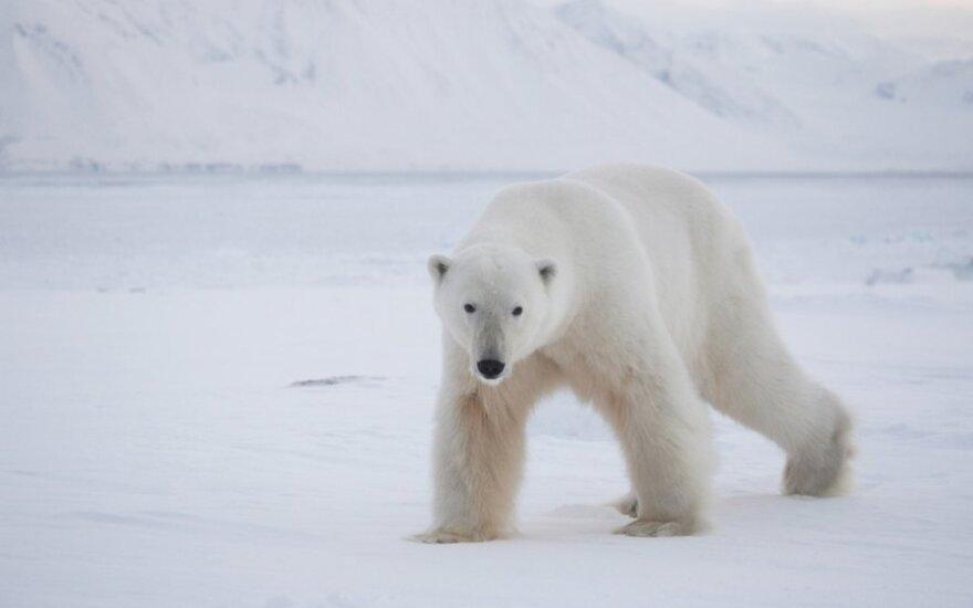 Svalbardas