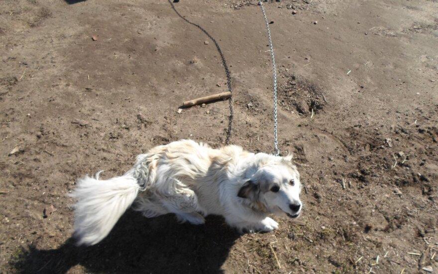 Rūdiškėse dingo šuniukas