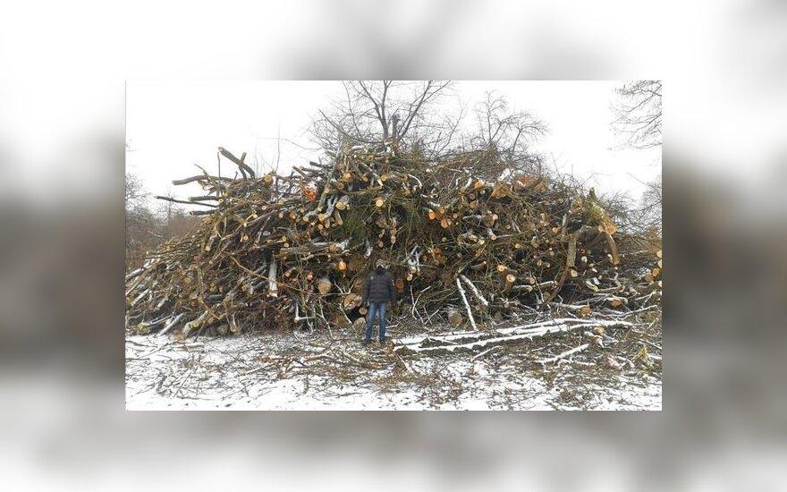 Trakuose iškirsti medžiai