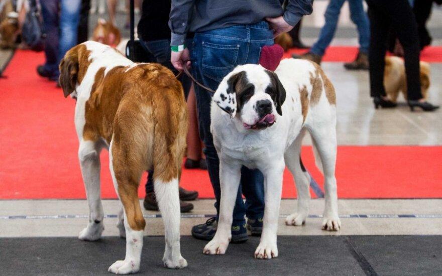 Tarptautinės šunų parodos sostinėje akimirkos I