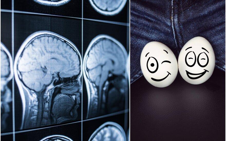 Smegenų ir sėklidžių ryšys.