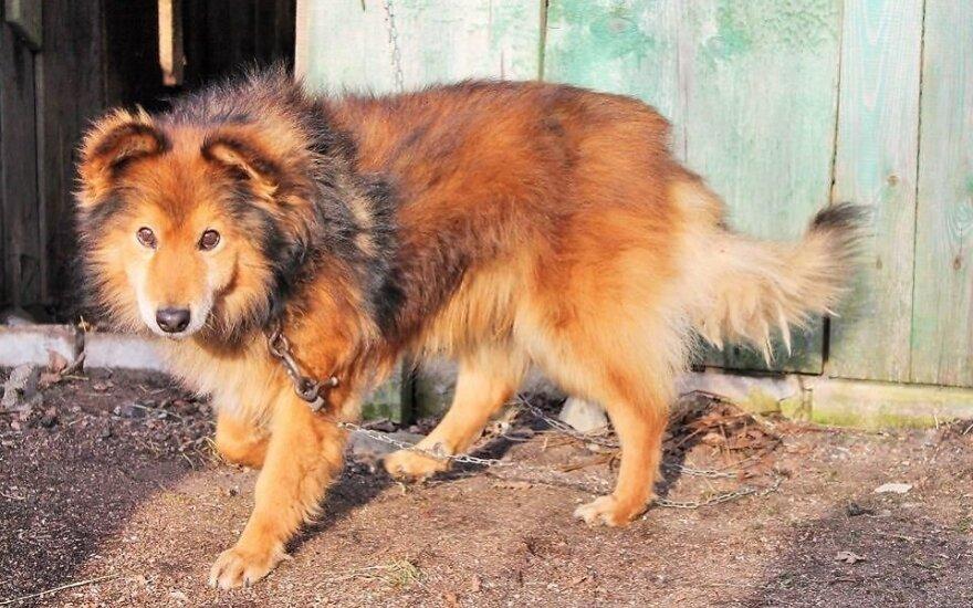 Aklas šunelis Šeltis ieško namų