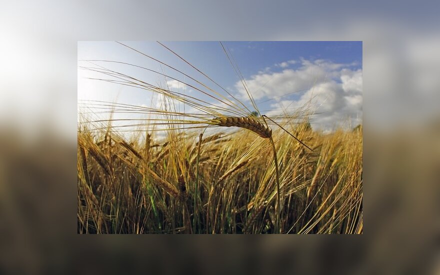 ES nori baigti ginčus dėl GMO