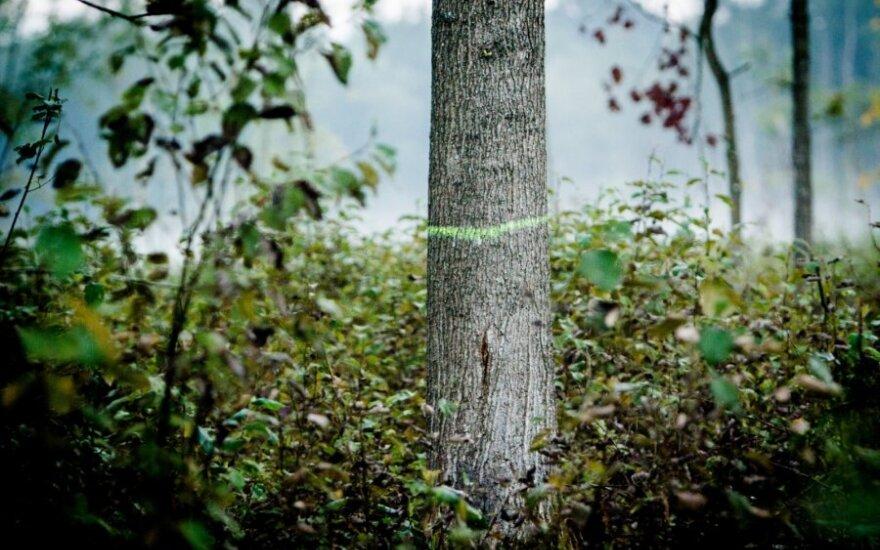 Kova dėl miškų – kas laimės lemiamą mūšį?