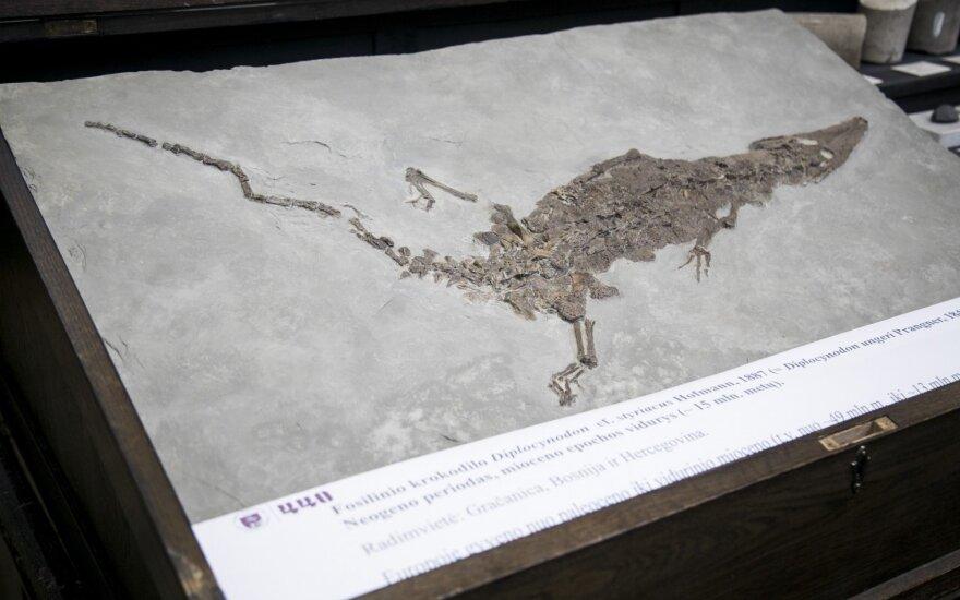 Vilniaus universiteto geologijos muziejuje – retas radinys