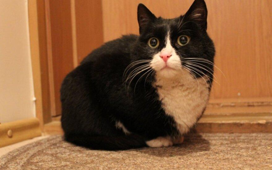Išgelbėtas iš audros katinėlis ieško namų