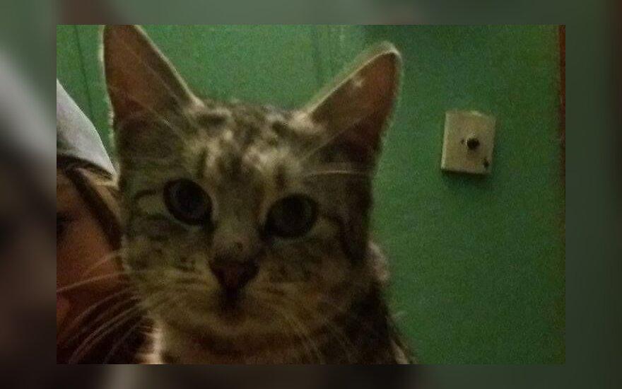 Alytuje laiptinėje apsigyvenusiai katytei ieškoma bent laikina globa