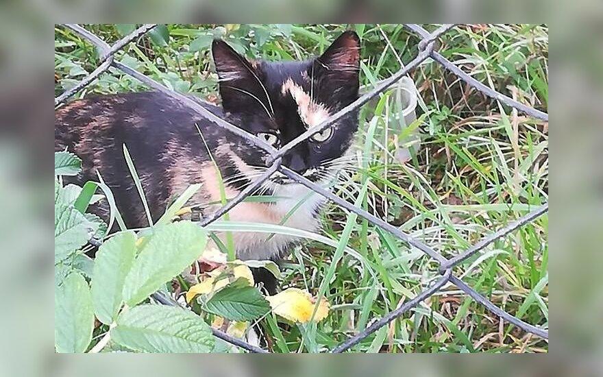 Rastinėnų soduose rastiems dviems kačiukams reikalinga laikina globa