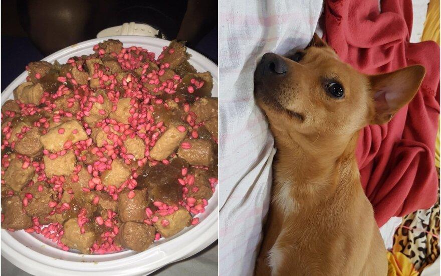 Vilniaus rajono gyventoja kieme aptiko užnuodytą šunų ėdalą (dešinėje - jos augintinis)
