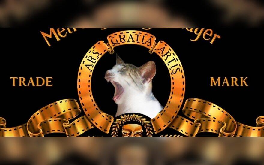 Kačių pasaulio Merlin Monro - Murlin ieško namų!