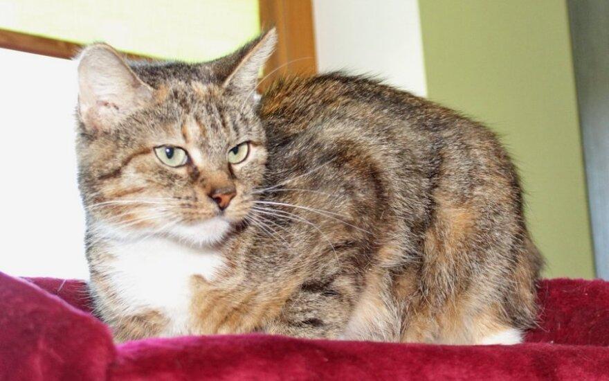 Rusnė ir Viltė - dvi mielos katytės ieškančios namų