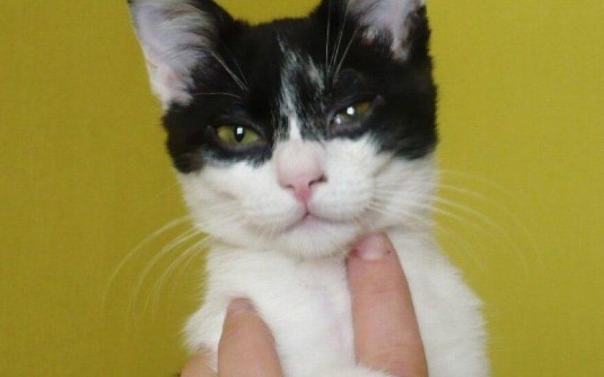 Šuniško charakterio kačiukas Pipiras ieško namų.