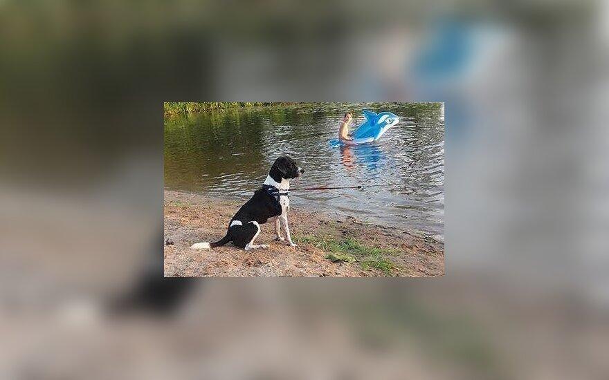 Prašo pagalbos – Didžiasalio kaime dingo šuo