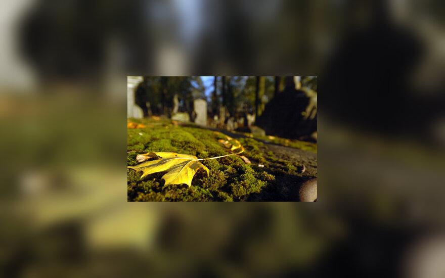 Ruduo, lapai, lapas, medžiai, miškas