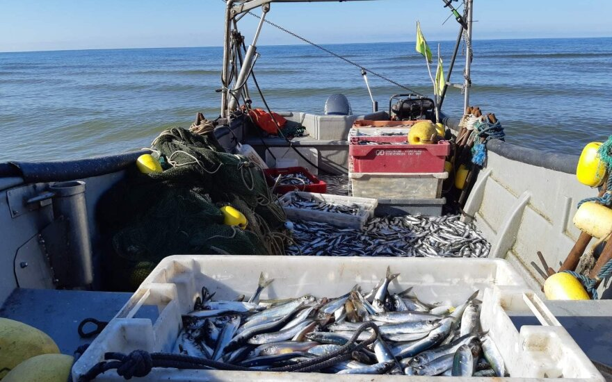 Verslinės žvejybos laimikis
