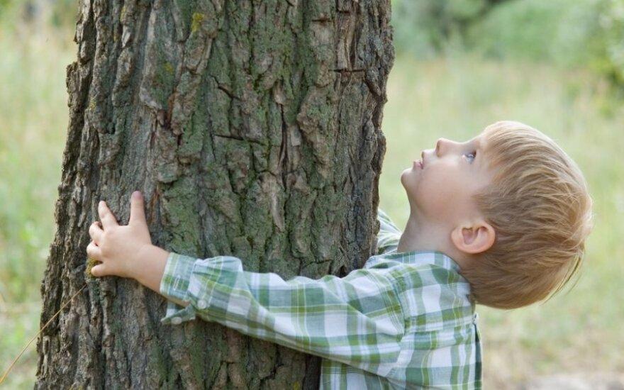 Aukščiausi ir gražiausi Lietuvos medžiai