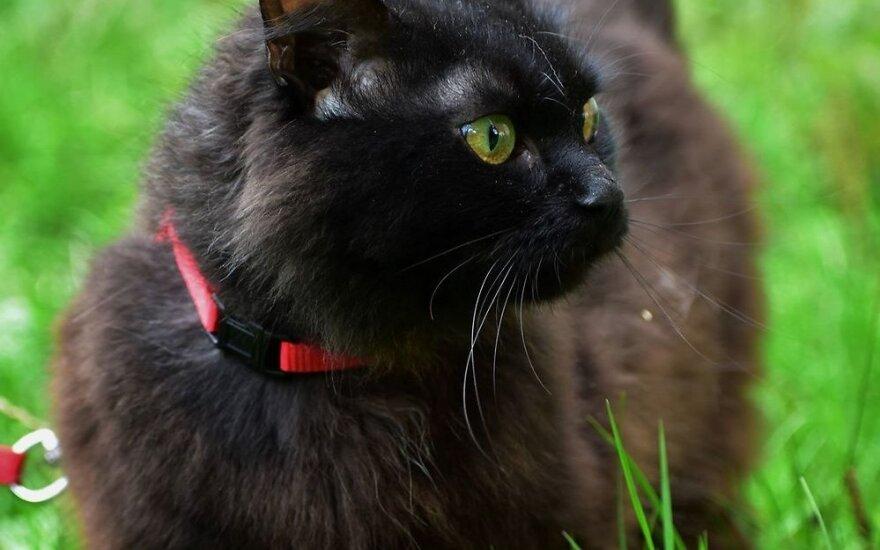 Dovanojamas švelnumas: katytė Roka gali praskaidrinti tamsius rudens vakarus