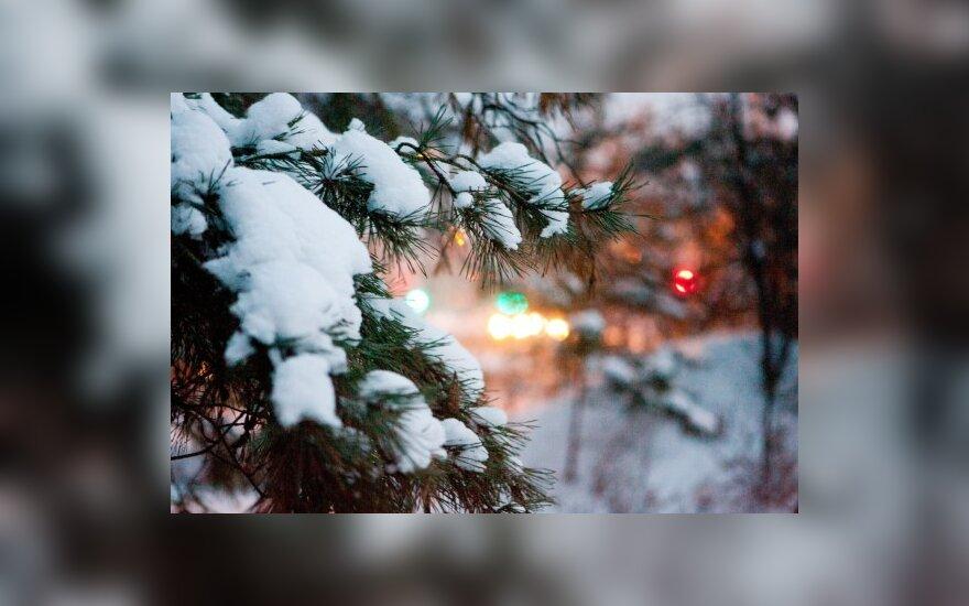 Idėjų Kalėdoms semiasi iš gamtos