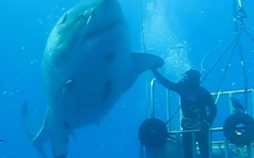 Naras susitinka su didžiuoju baltuoju rykliu Deep Blue