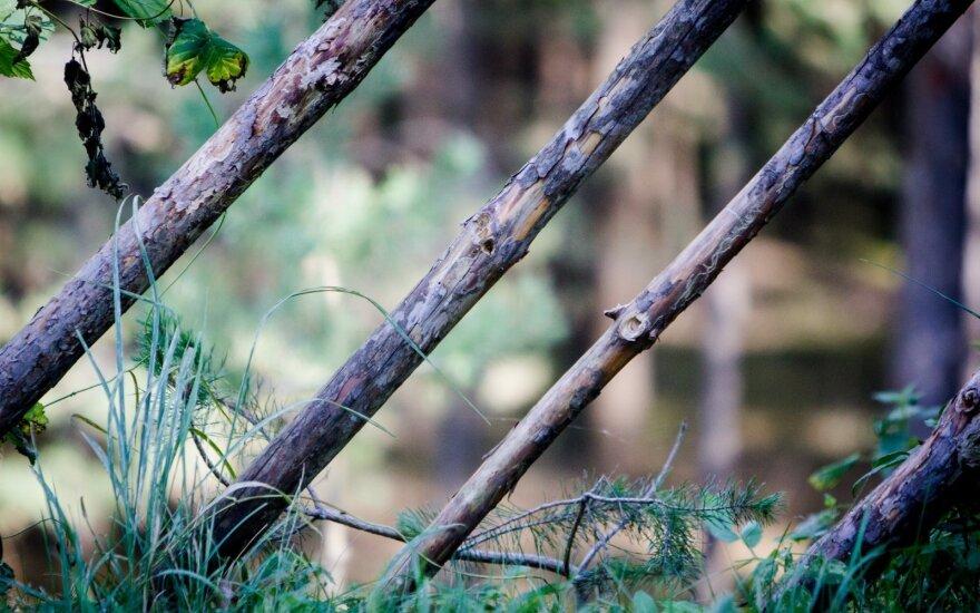Medikų rankose atsidūrusi dvylikametė pasakojo, kad miškelyje ją mušė keturiese