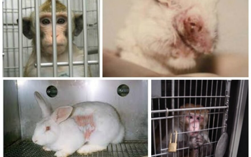 Organizacijos PETA slapta darytų  nuotraukų koliažas
