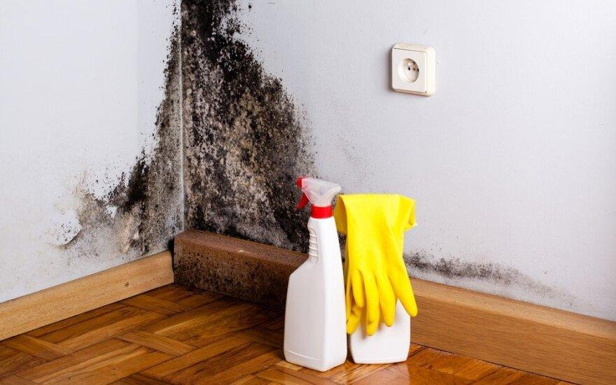 6 elementarūs ir efektyvūs naminiai būdai atsikratyti pelėsio