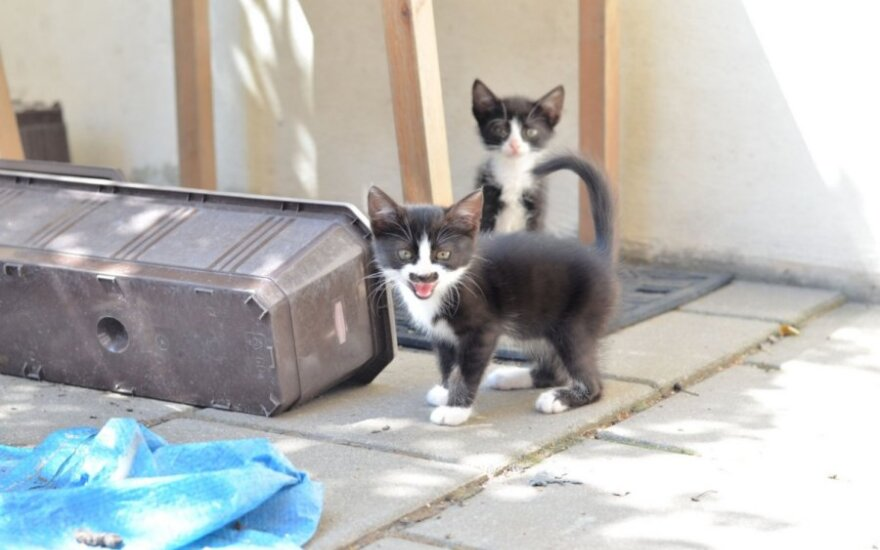 Varšuvos gatvės kačiukų vargai, jie prašo išgelbėti!