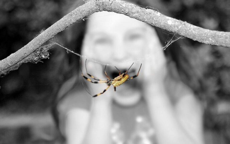 Bijo vorų
