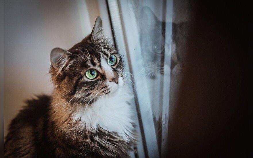 Katytei Grėjai gyvenimas prieglaudoje yra kančia: ieško namų