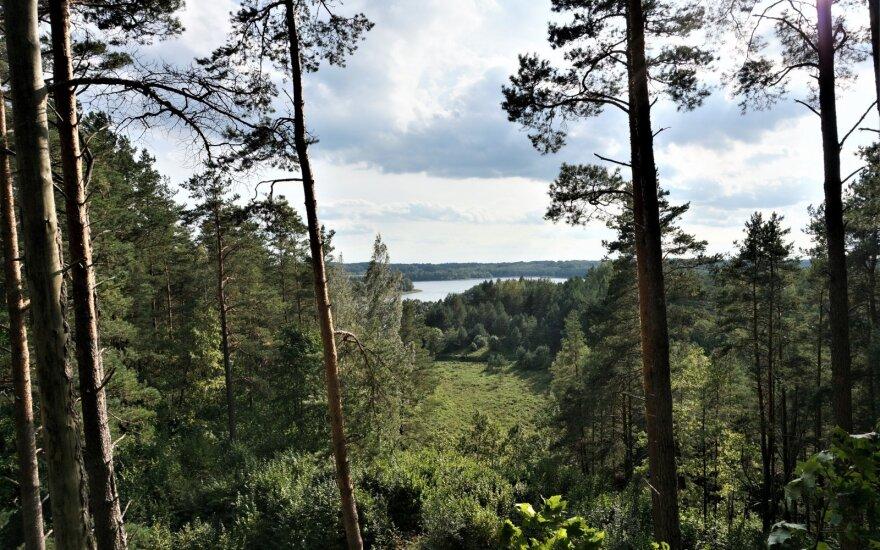 Vaizdas nuo Ginučių piliakalnio. Taip ar panašiai Ūkojo ežerą tarp pušelių turėjo matyti Lietuvos Prezidentas Antanas Smetona, 1934 m. užlipęs ant piliakalnio ir viršuje pasodinęs ąžuoliuką