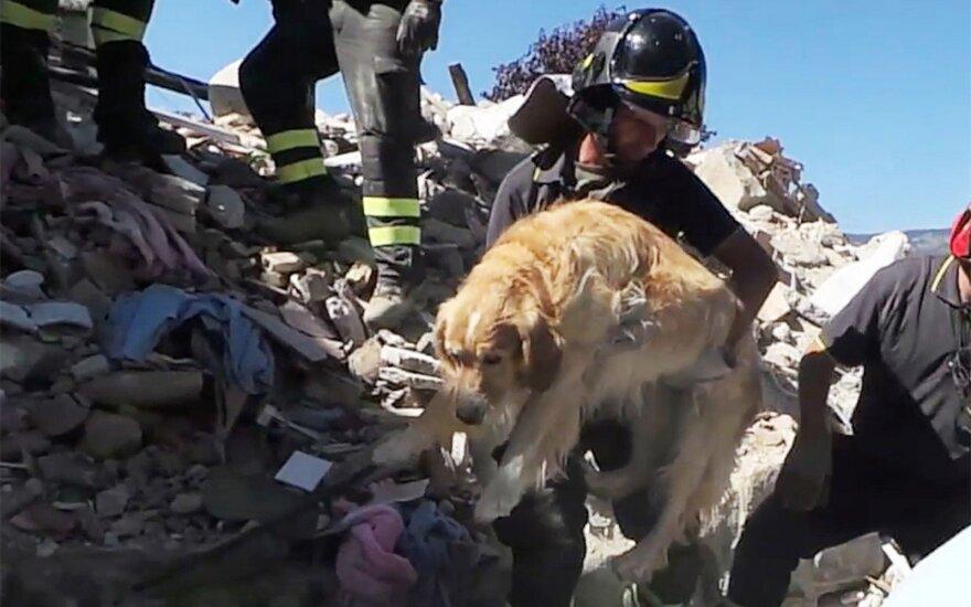 Italijoje išgelbėtas devynias dienas po griuvėsias praleidęs šuo Romeo