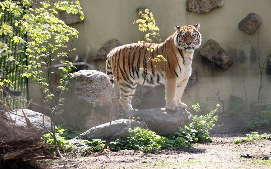 Nutraukti konkursą dėl Zoologijos sodo rekonstrukcijos pareikalavo ir VPT