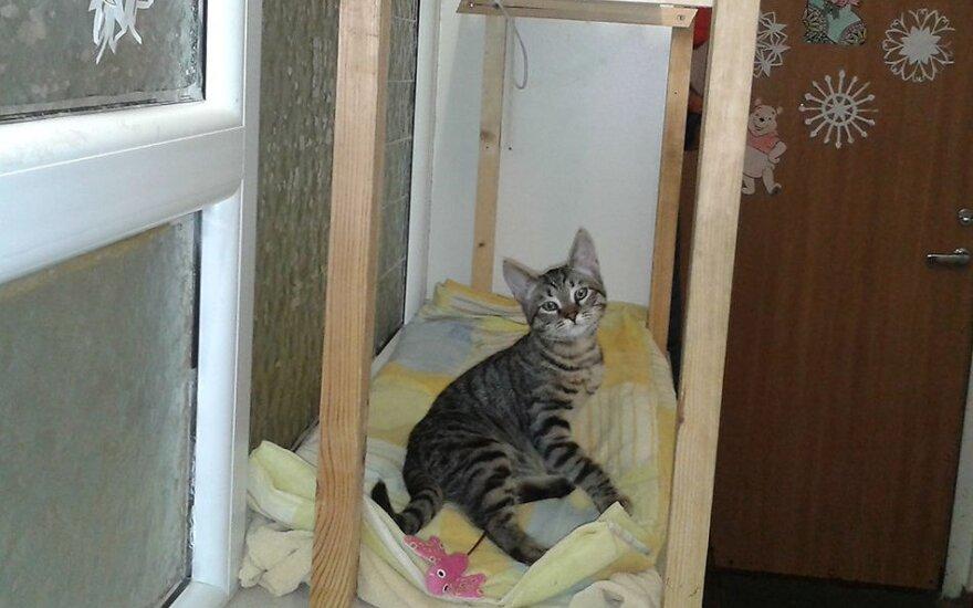 Ieškantiems keturkojo draugo – katytė Perla siūlo draugystę