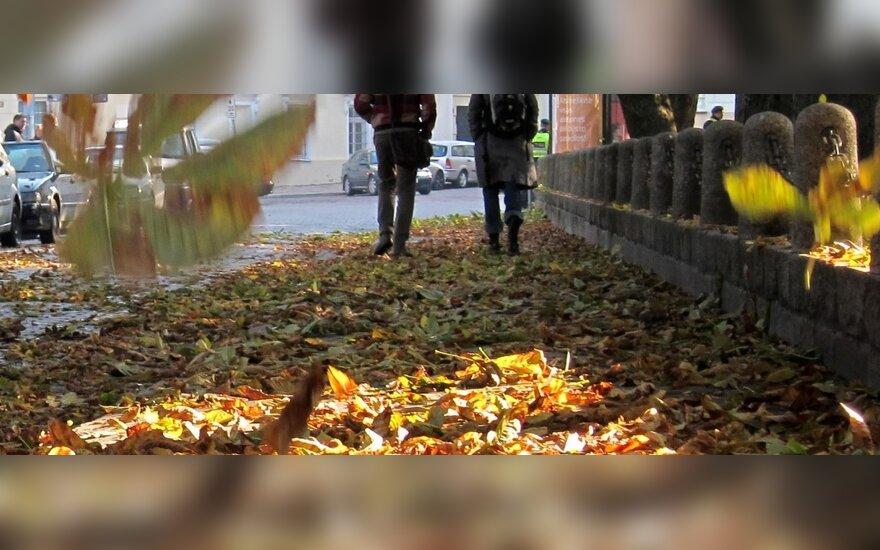 Senolių išmintis ir gamtininkų stebėjimai prognozuoja gražų rudenį