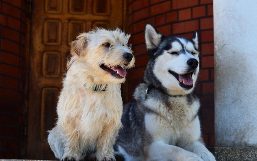 Beglobius gyvūnus priglaudusių šeimininkų istorijos – laimingos