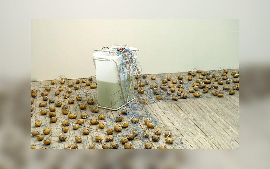 Mokslininkai pasilinksmino: iš bulvės pagaminta baterija gali ilgiau nei mėnesį dovanoti šviesą