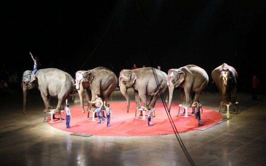 Portugalija uždraudė naudoti laukinius gyvūnus cirko pasirodymuose