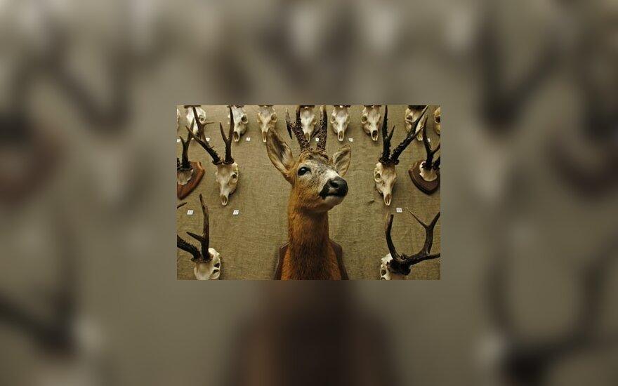 A.Brazausko medžioklės trofėjų kolekcija gali atsidurti Valdovų rūmuose arba Trakų pilyje