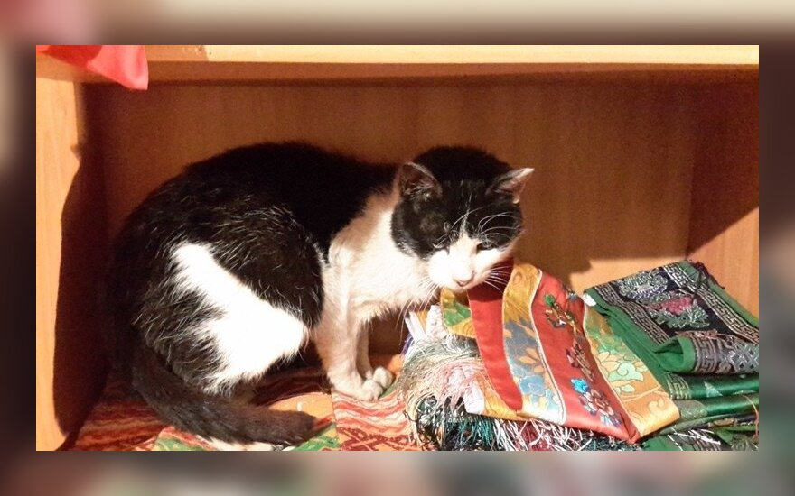 Užupyje rastas silpnas katinėlis Rikis – reikalinga parama