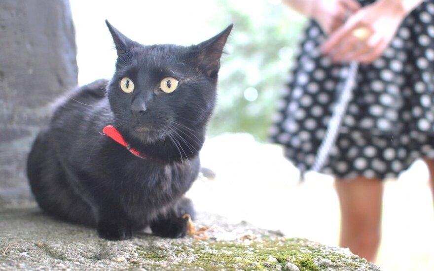 Namuose priglaustas katinas tapo namų pokštininku