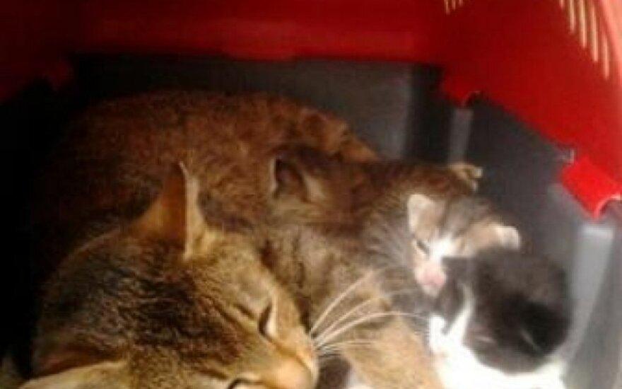Marusia su kačiukais